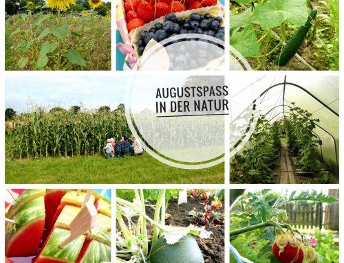 Kinder Gemüseernte im August