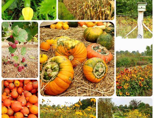 Herbstaktionen mit Kindern