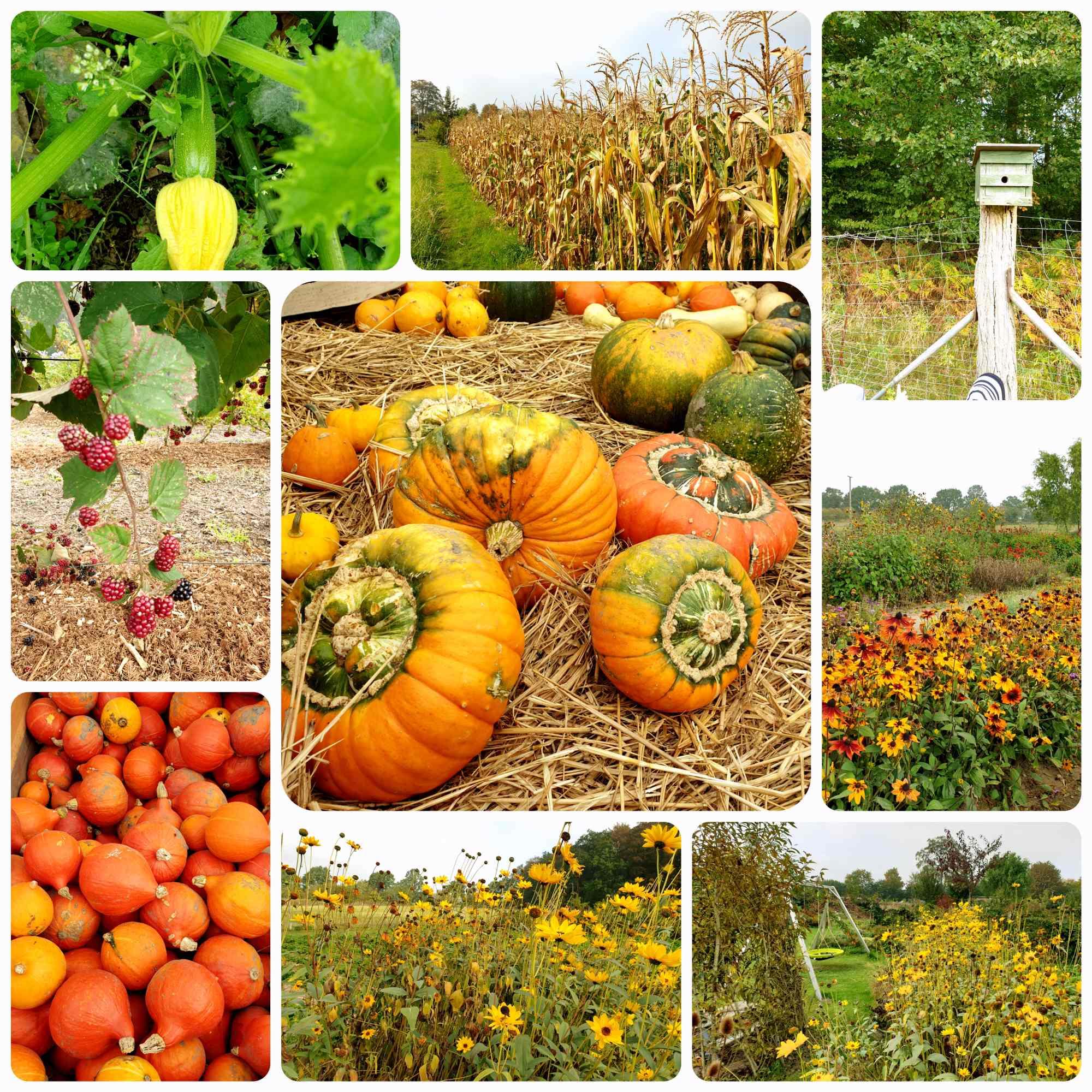 Herbstaktionen mit Kindern (1)